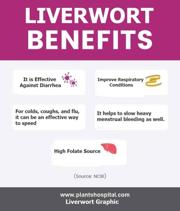 Liverwort-benefits-graphic