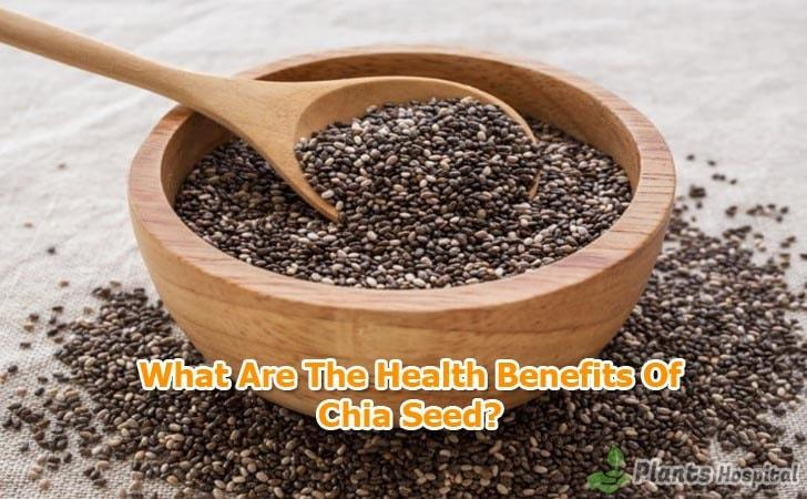 benefits-of-chia-seed