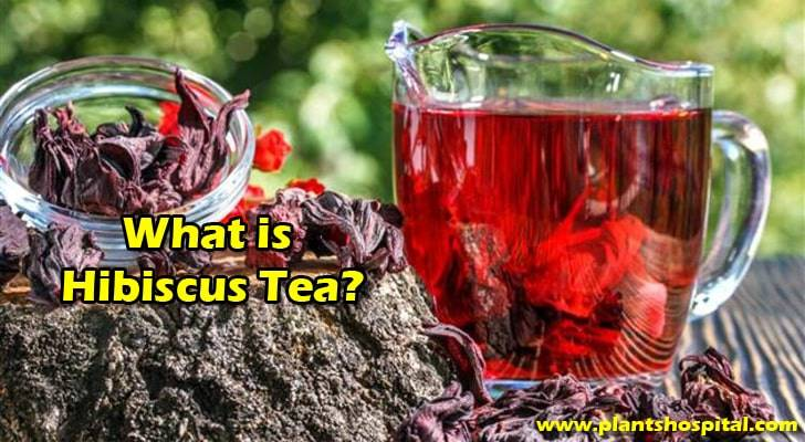 what-is-hibiscus-tea