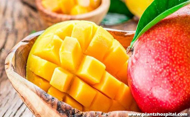 mangos-benefits