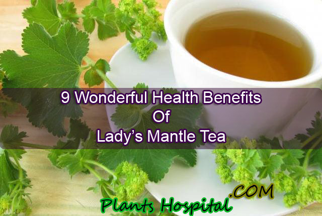 Lady's Mantle Tea