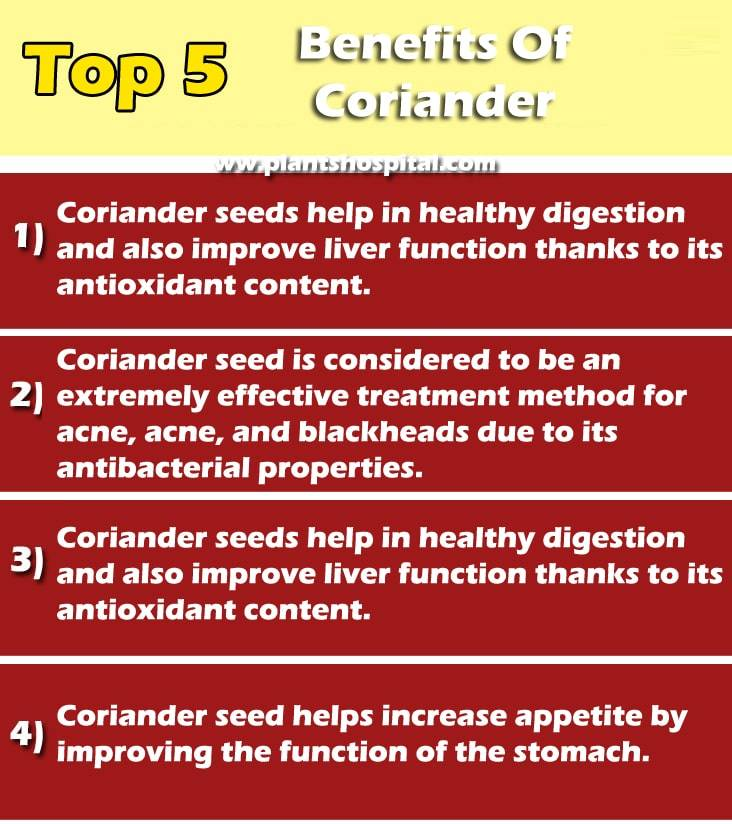 Coriander-graphic