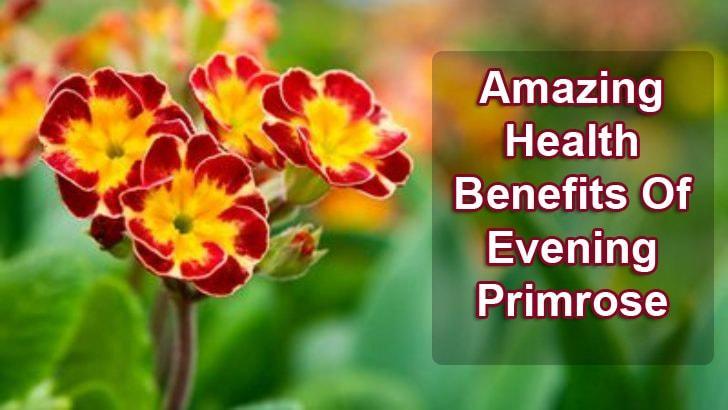 benefits of evening primrose