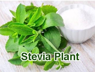 Stevia Plant: Health Benefits, Uses, Side Effects and Warning