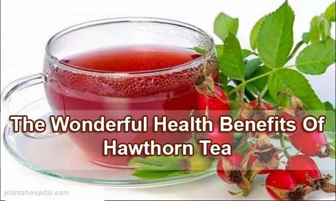 Hawthorn_Tea