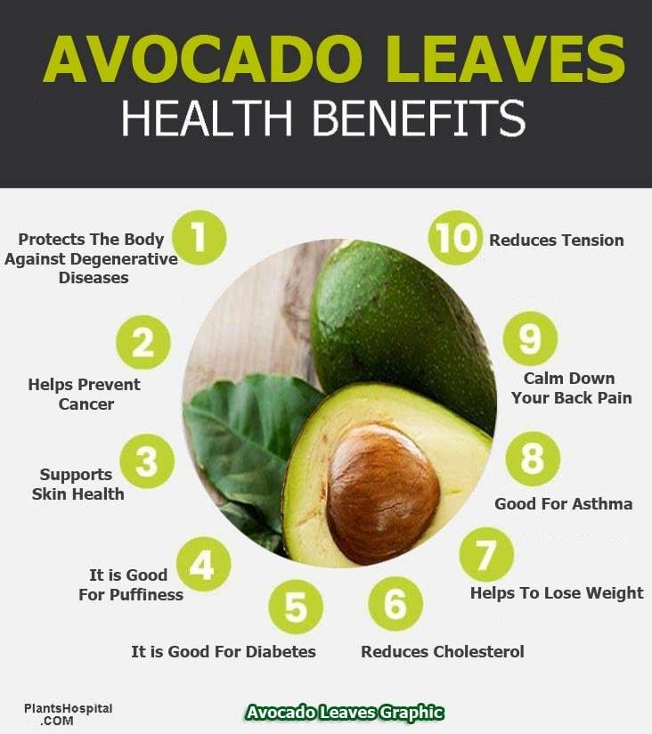 avocado-leaves-graphic
