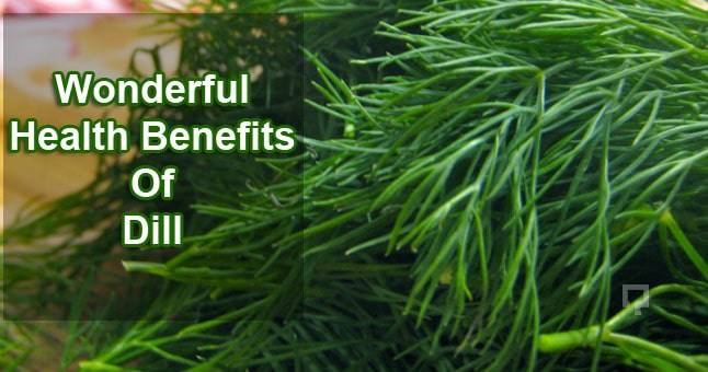 benefits-of-dill