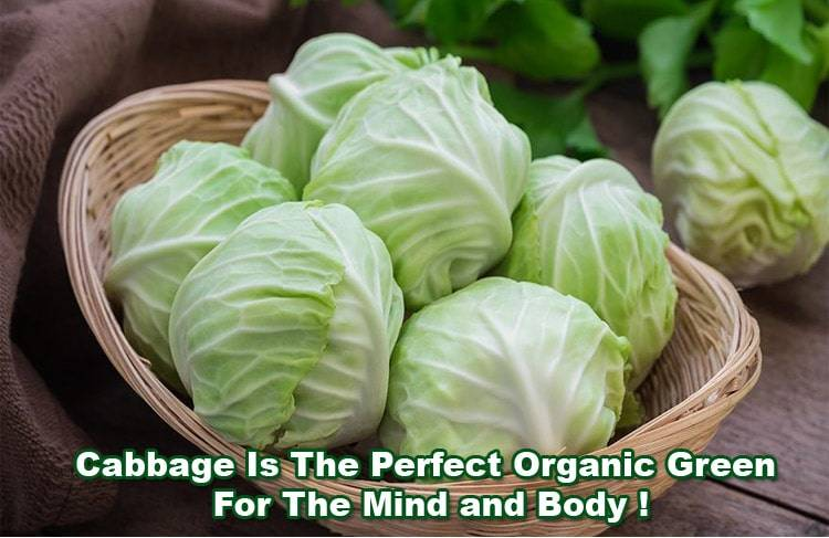 benefits-of-cabbage