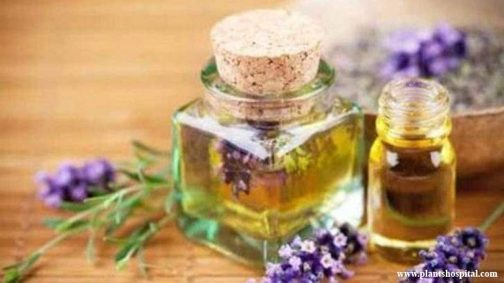 thyme-essential-oil