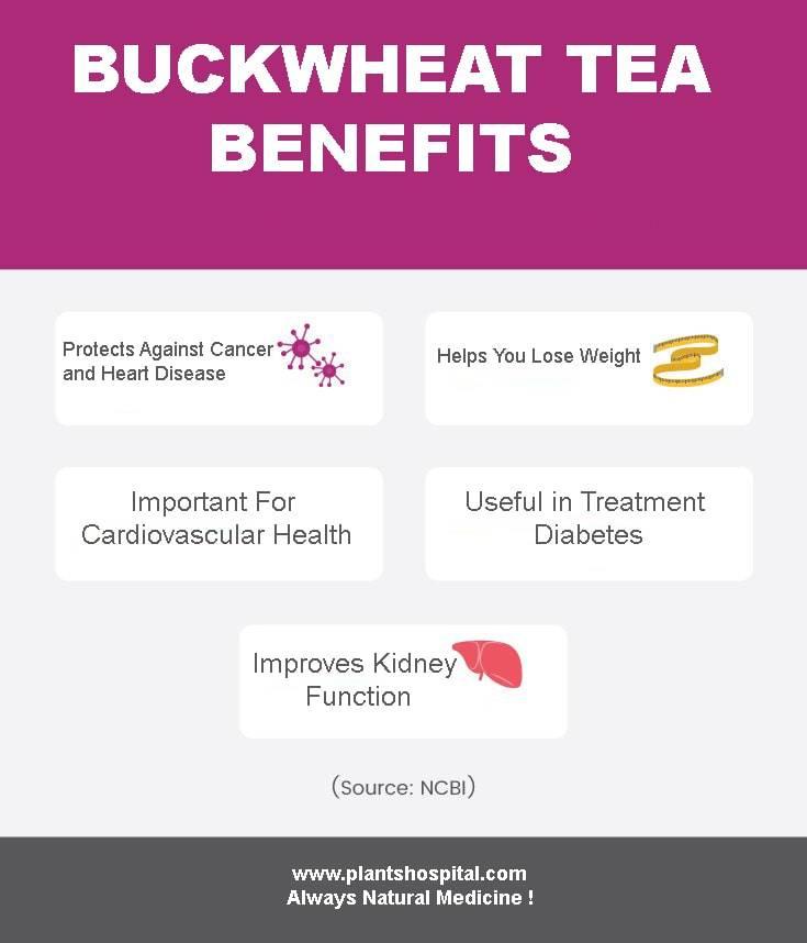 BuckwheatTea_Infographic