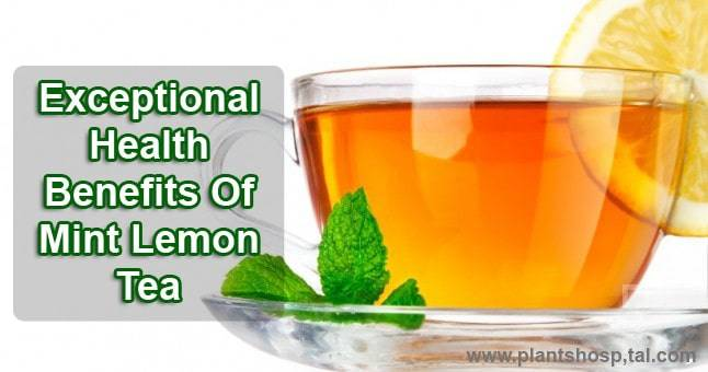 20 Exceptional Health Benefits Of Mint Lemon Tea (#5 Th Very