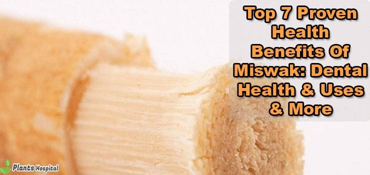 benefits-of-miswak