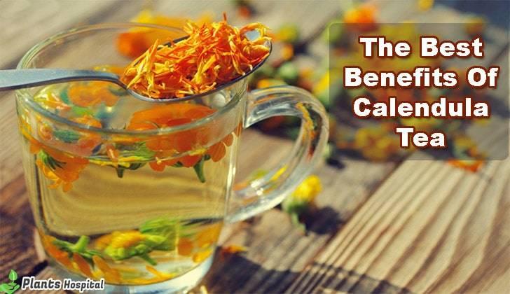 calendula-tea