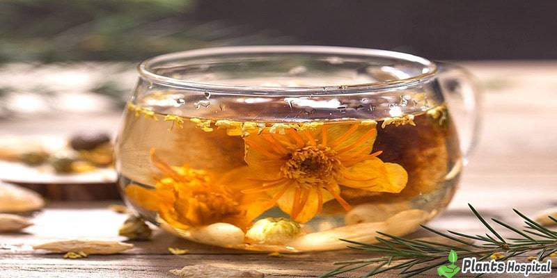 jasmine-tea-benefits