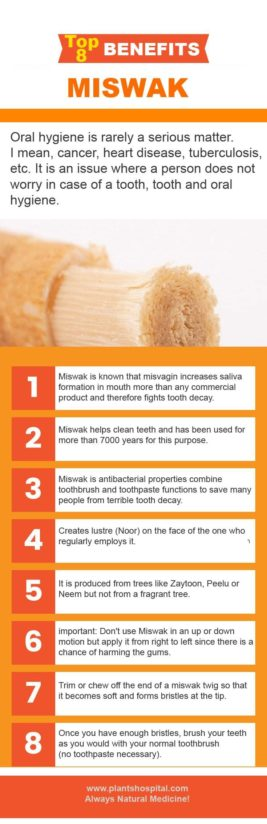 miswak-graphic
