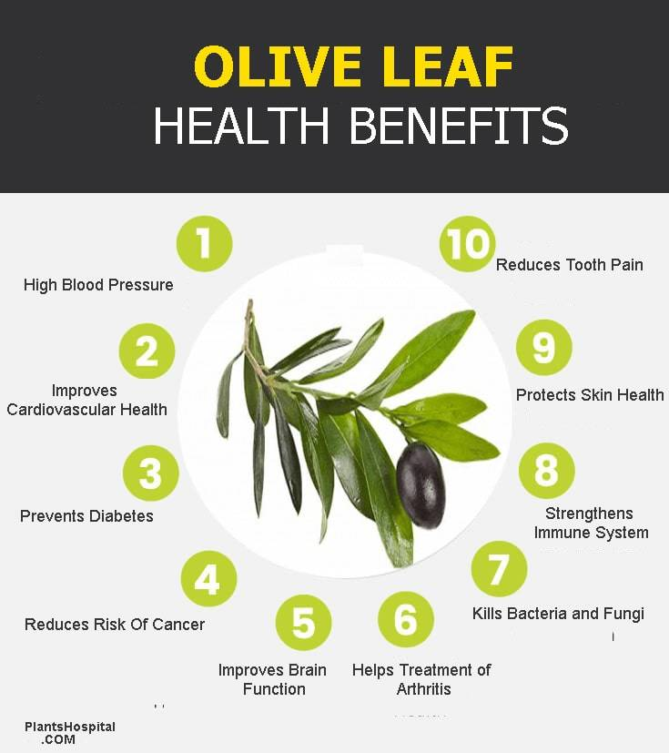 olive-leaf-graphic