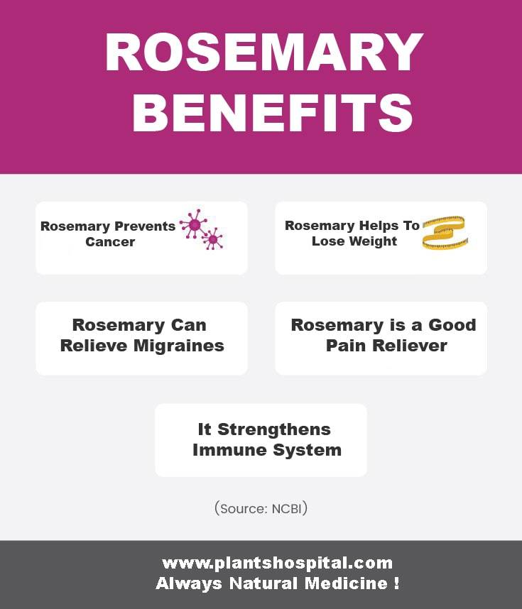 rosemary-graphic