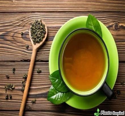 7 Wonderful Health Benefits Of Senna Tea Amp Side Effects
