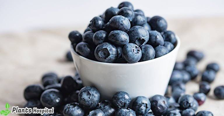benefits-of-blueberry-tea