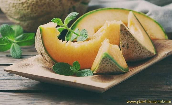 benefits-of-melon