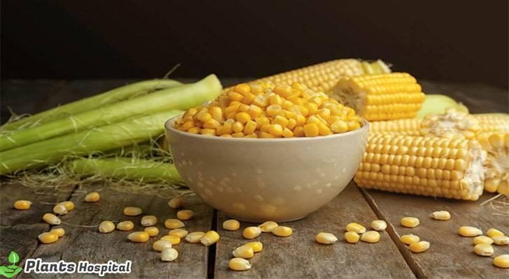 corn-benefits