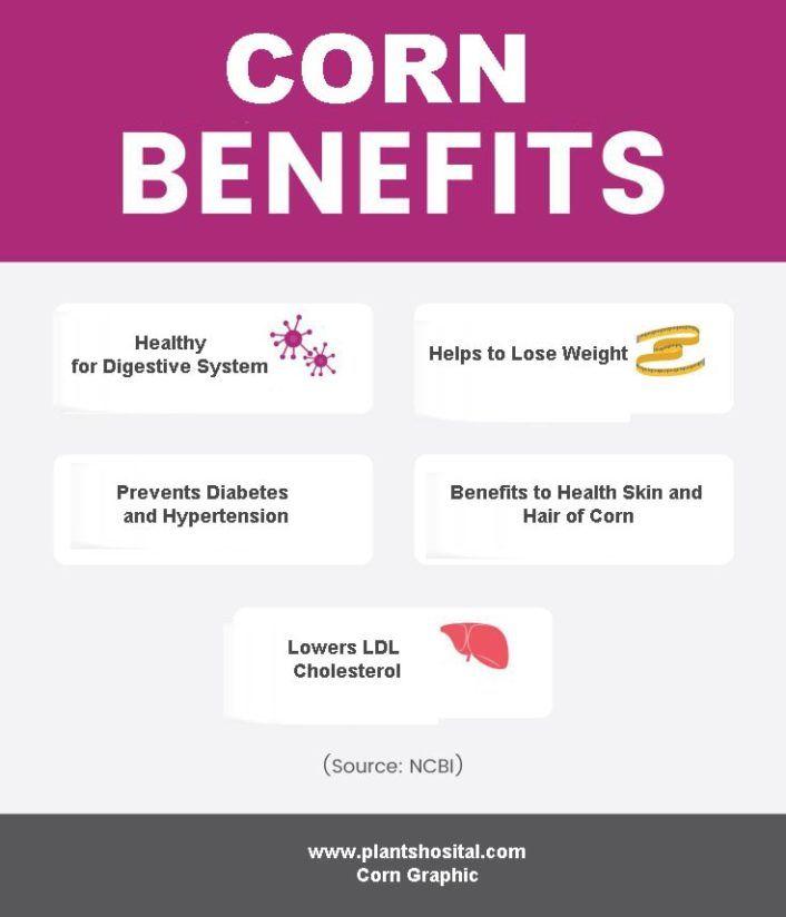 corn-graphic