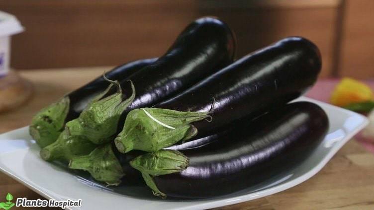 eggplant-benefits