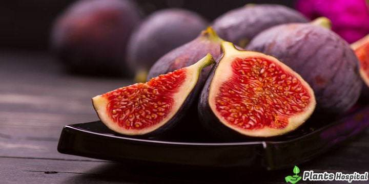 figs-benefits