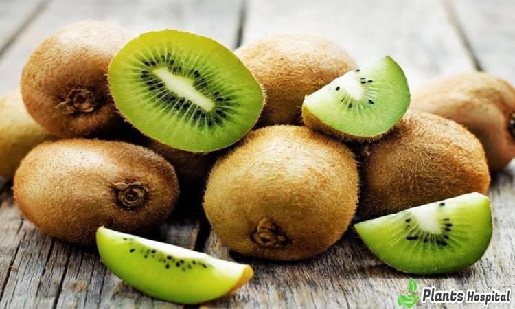 kiwi-benefits