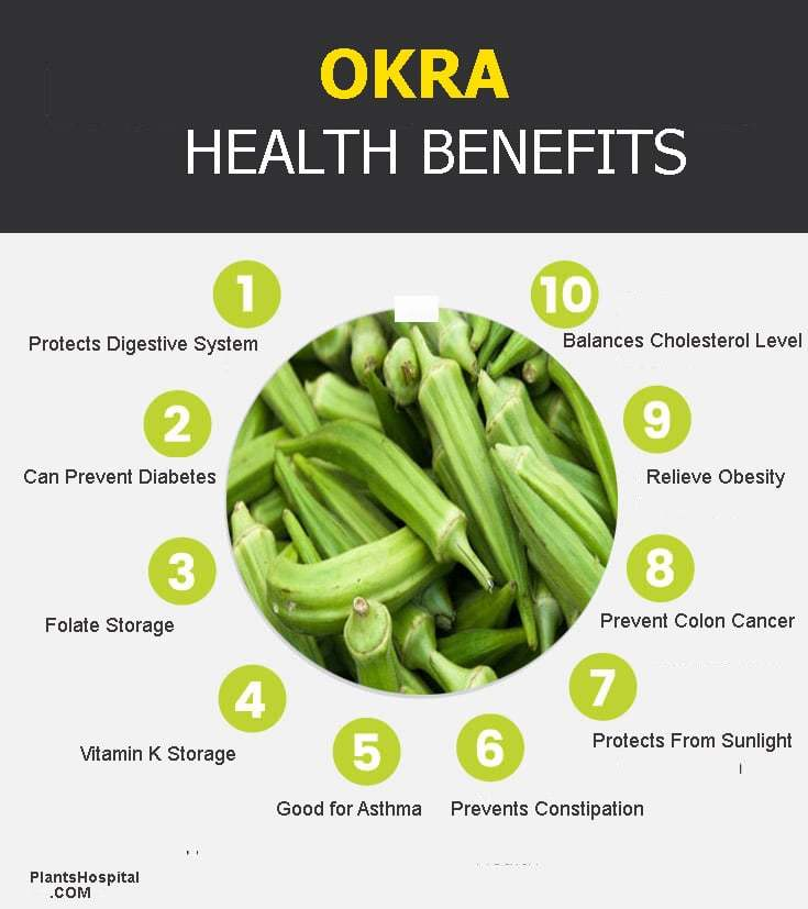 okra-graphic