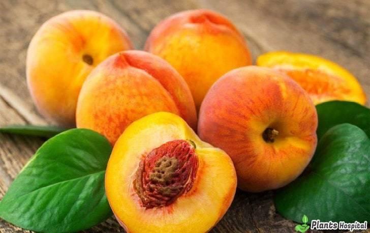 peach-benefits