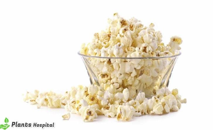 popcorn-benefits