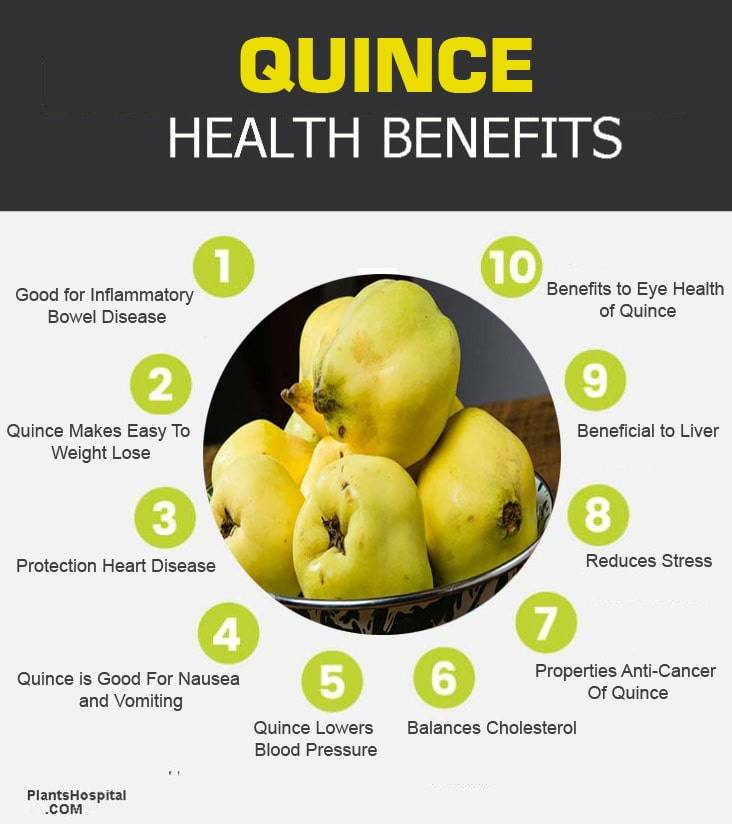 quince-graphic