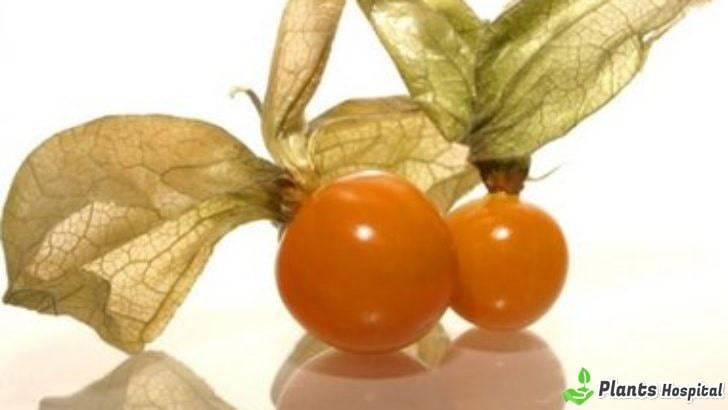 Golden-Strawberry