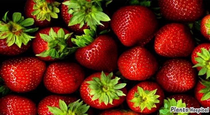 Strawberry-benefits