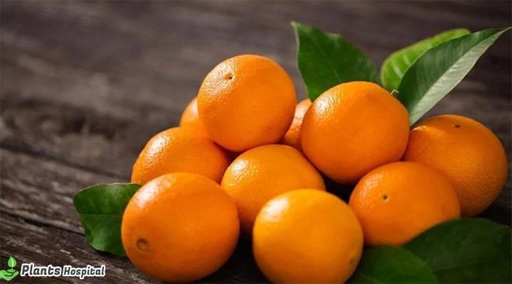 benefits-of-orange
