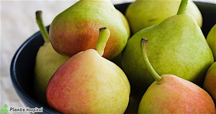 benefits-of-pear