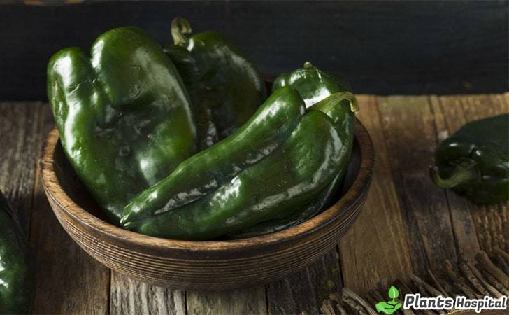 poblano-pepper-benefits