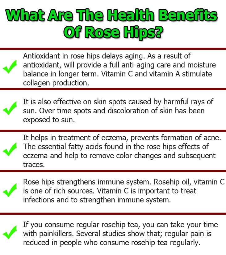 Rose-Hips-infographic