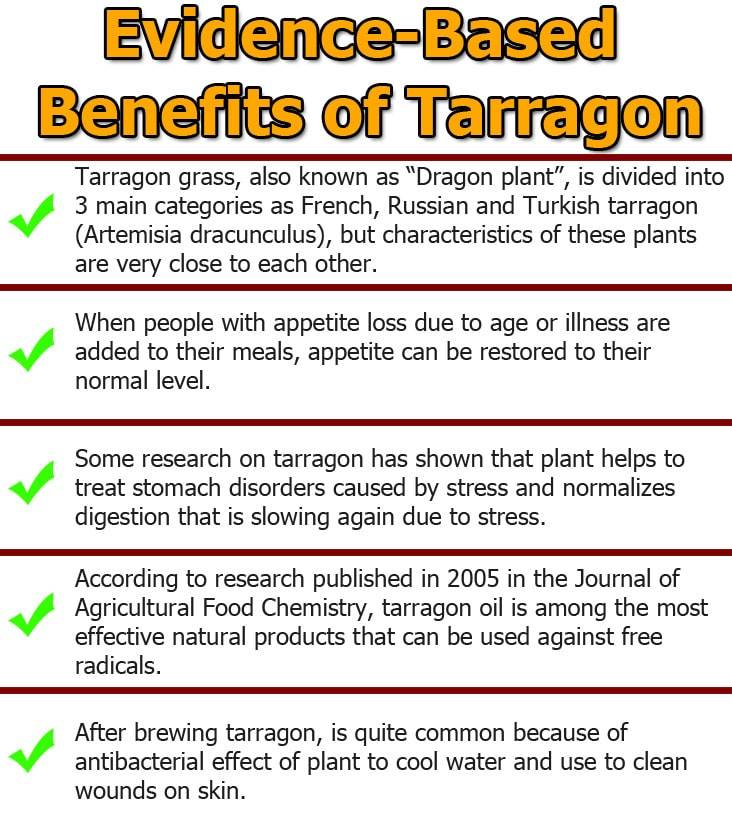 Tarragon-tea-infographic