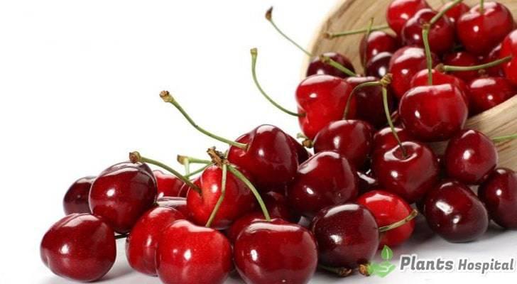 cherry-stems-benefits