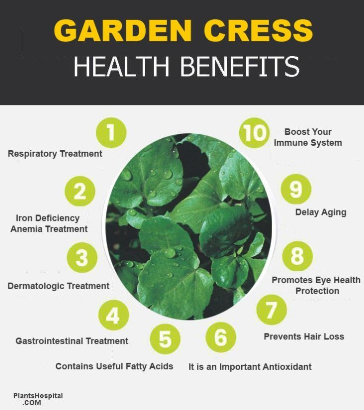 garden-cress-graphic