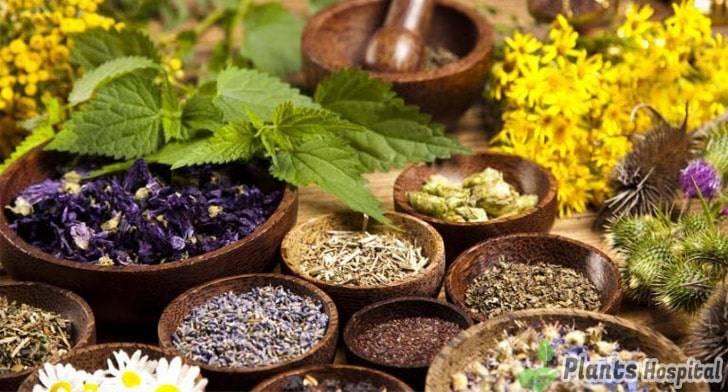 herbal-plants