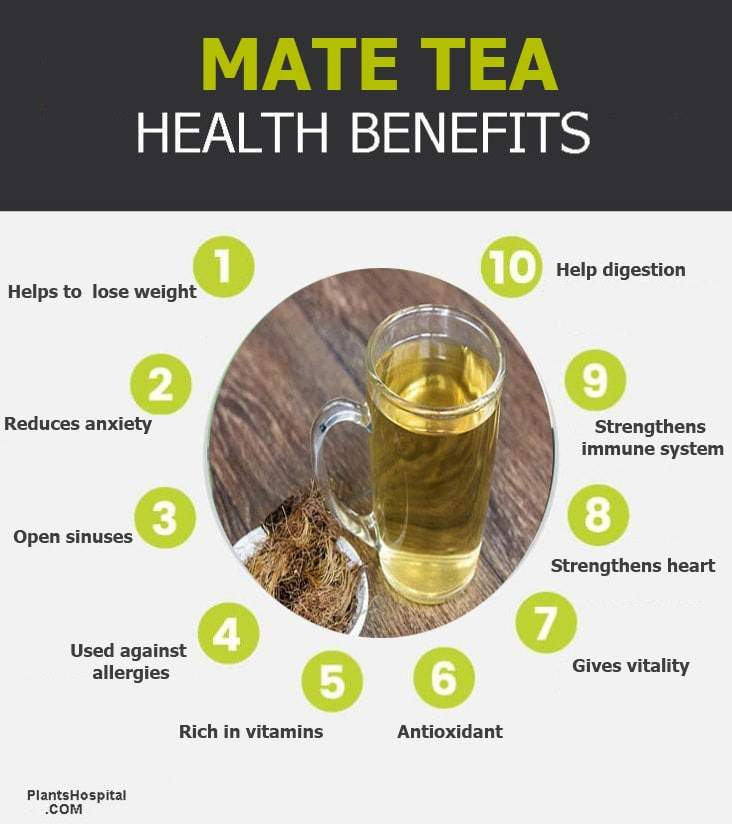 mate-tea-graphic