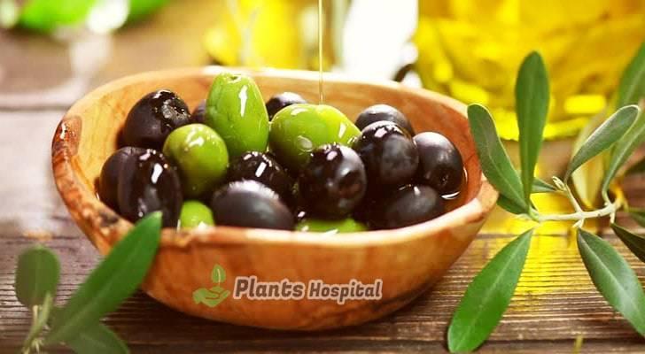 olive-benefits