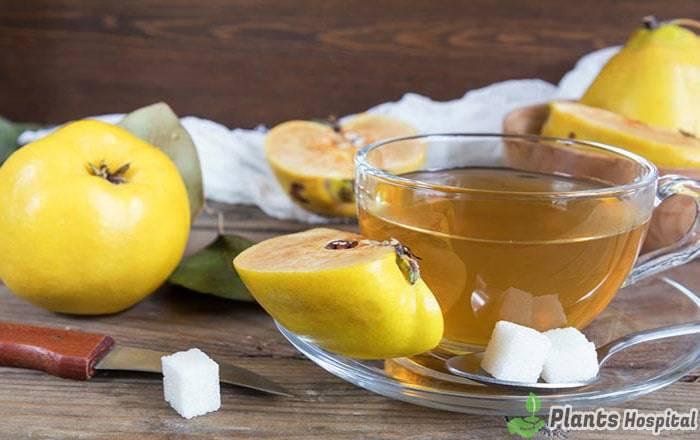 quince-leaf-tea