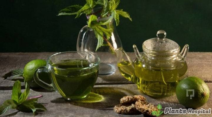 tarragon-tea-benefits