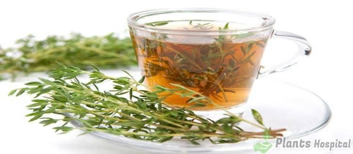 thyme-tea-benefits