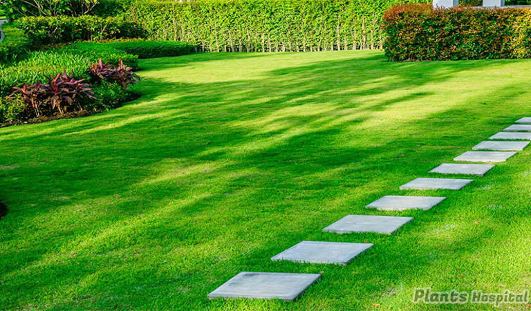 how-to-start-a-lawn-care-business