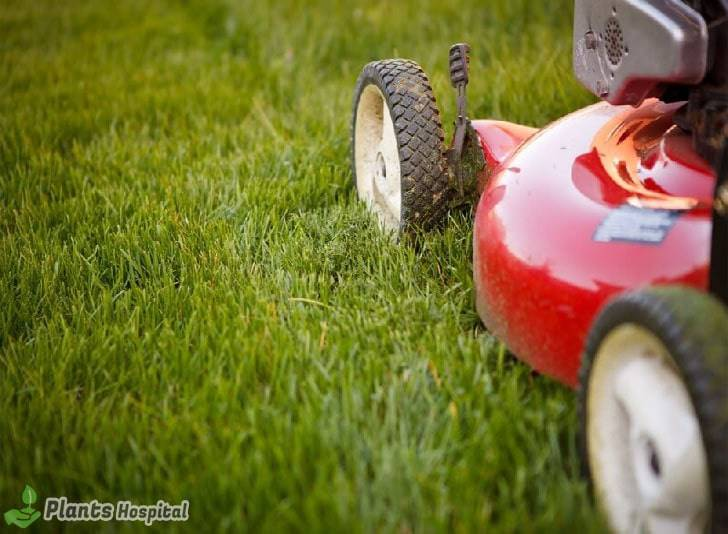 lawn-aerate-history